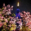夜桜デート200