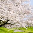 武蔵野公園200