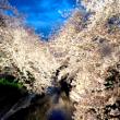 夜桜200