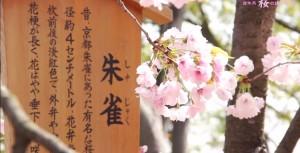 syujyaku
