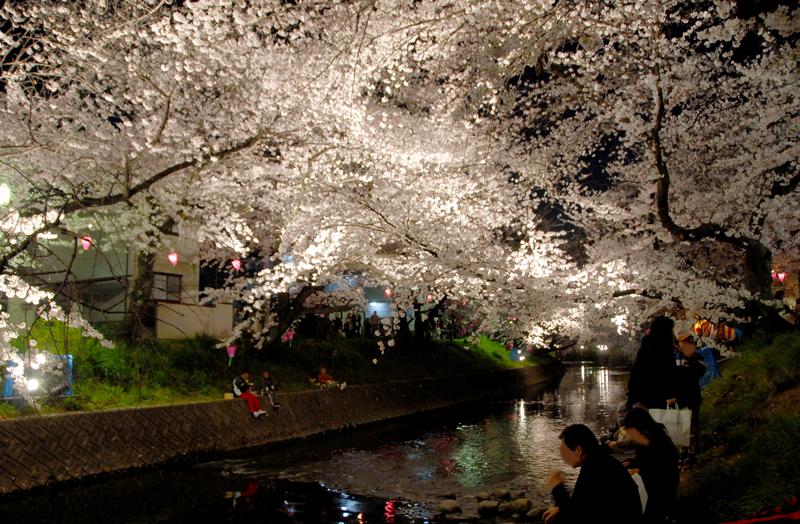 川べり夜桜