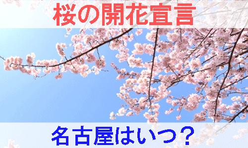 名古屋の桜の開花宣言を紹介する画像