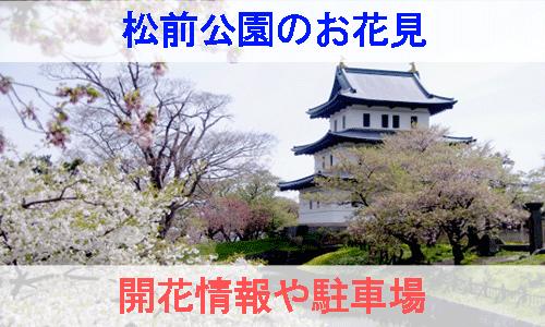 松前公園のお花見の開花情報や駐車場について紹介するイメージ画像