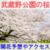 武蔵野公園の桜の開花予想とアクセス方法を紹介するイメージ画像