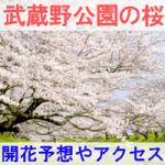 東京都立【武蔵野公園】 2017年 桜の開花予想とアクセス方法