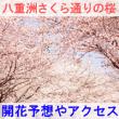八重洲さくら通りの桜の開花予想とアクセス方法を紹介するイメージ画像