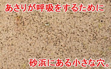 砂浜 出水管
