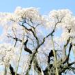 滝桜200