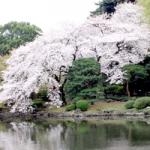 千秋公園200