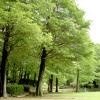森林公園200