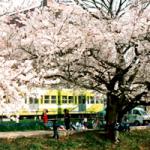 芦野公園200
