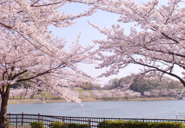 岩手県盛岡市【高松公園・高松の池】桜の開花予想とアクセス | 季節を ...