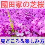 國田家の芝桜の見どころと楽しみ方を紹介する画像