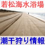 若松海水浴場の潮干狩り情報を紹介するイメージ画像