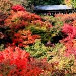 東福寺の紅葉を巡る!詳細情報と見どころ「通天橋・本坊庭園」等。