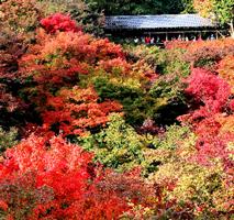 東福寺200