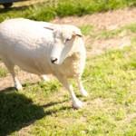 岐阜県中津川市【ふれあい牧場】でバーベキュー&動物たちとふれあいのお散歩