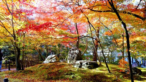 永観堂(庭園)600