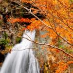 養老渓谷の紅葉は日帰りでも楽しめるの?見どころは?