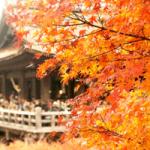 【京都紅葉の見頃時期】高台寺と清水寺のライトアップに行く楽しみ方は?