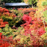 京都の紅葉 日帰り短時間でも満足なコースは東福寺&泉湧寺