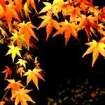 【京都の紅葉】将軍塚大日堂はライトアップも夜景も車で行って楽しめる!
