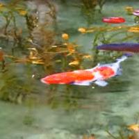 モネの池の画像