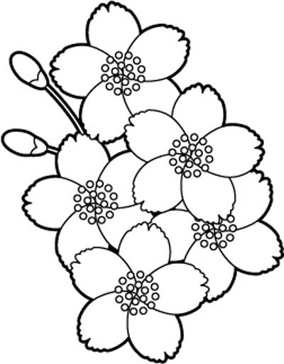 シンプルな白黒の桜