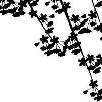 白黒の桜のイラスト