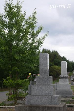 お墓と木と曇り空の写真