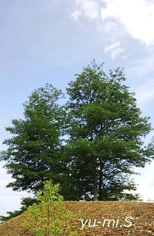 木と空と雲のバランスが良い写真