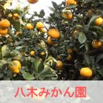 愛知県田原市のみかん狩りは【八木みかん園】がおすすめ!