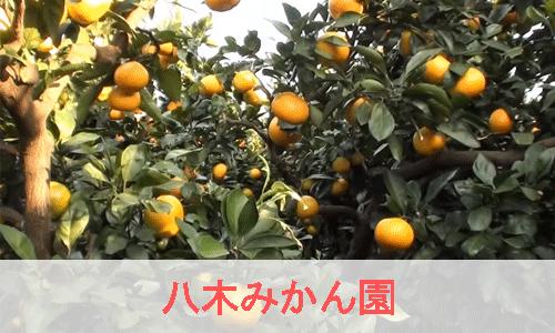 八木みかん園のイメージ画像