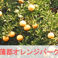 蒲郡オレンジパークのみかん狩りのイメージ画像