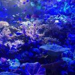 4名古屋港水族館