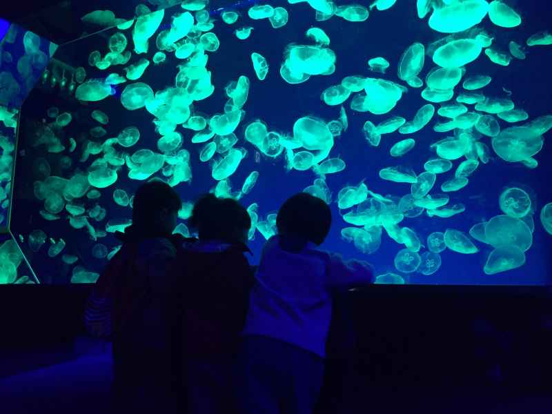 3名古屋港水族館